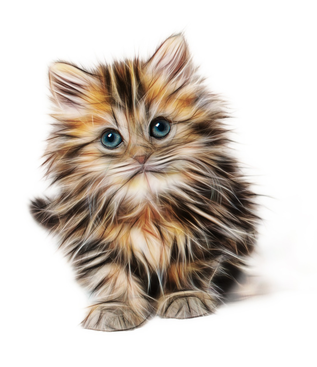 kitten-1582384_1280.jpg