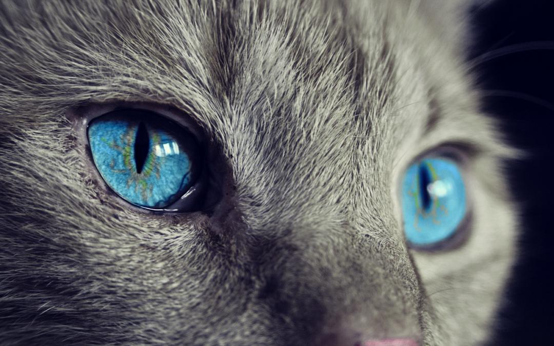 Miaou! Disponible sur Snapchat